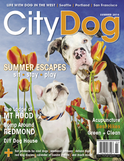 City Dog cover